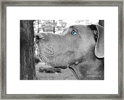 Dogus Framed Print
