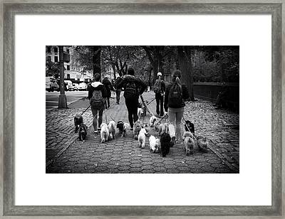 Dog Walking Framed Print by Jessica Jenney