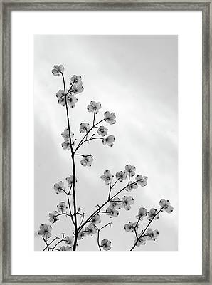 Dogwood Against The Sky Framed Print by Andy Puttbach