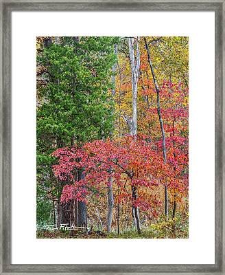Dogwood And Cedar Framed Print
