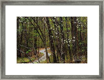 Dogwood And Country Road Framed Print