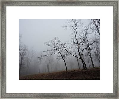 Dogwood And Persimmons In The Mist Framed Print by Jamie K Reaser