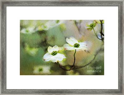 Dogwood Blooms Framed Print by Darren Fisher