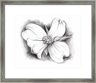 Dogwood Blossom Charcoal Framed Print by MM Anderson