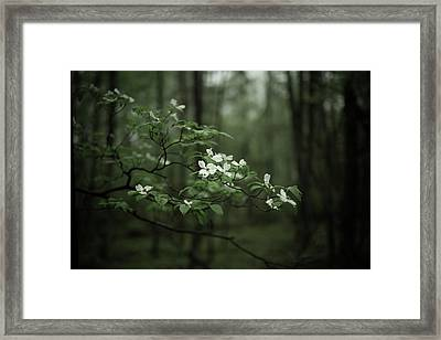 Dogwood Branch Framed Print