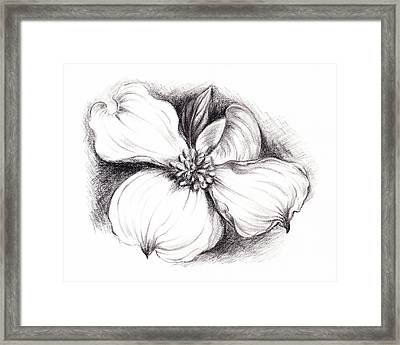 Dogwood Flower In Charcoal Framed Print by MM Anderson