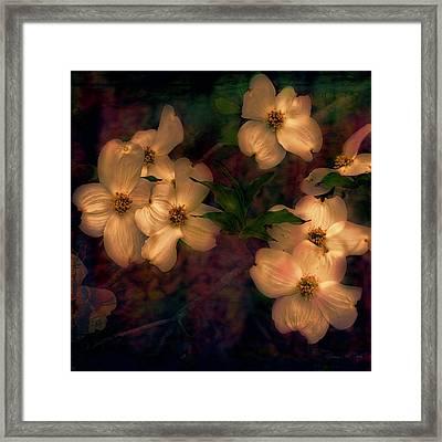 Dogwood Flowers Alight Framed Print by Bellesouth Studio