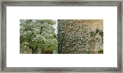 Dogwood Flowers And Apple Blossom  Framed Print by Tim Gainey