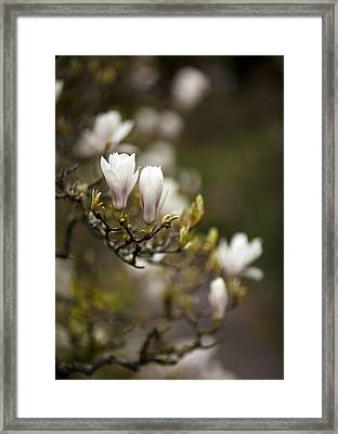 Dogwood Gathering Framed Print by Mike Reid