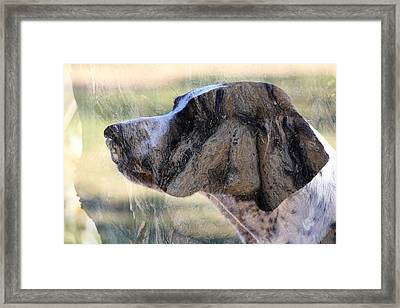 Dogwood Framed Print by Greg Wickenburg