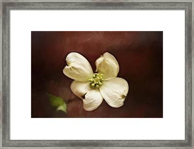 Dogwood Impression Framed Print