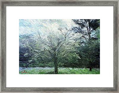 Dogwood In Bloom Framed Print by Gerhardt Isringhaus