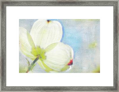 Dogwood Petals Framed Print