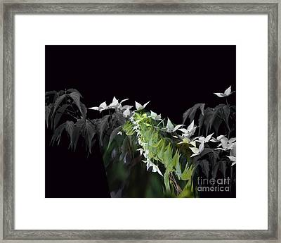 Dogwood Shades Of Grey Framed Print