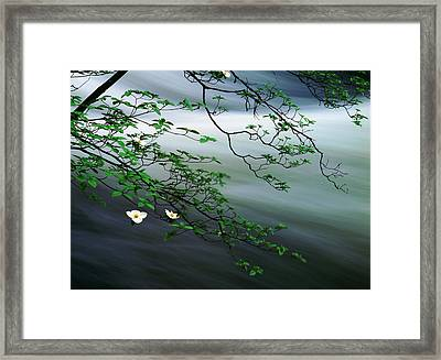 Dogwoods And Merced River Framed Print by Edward Mendes