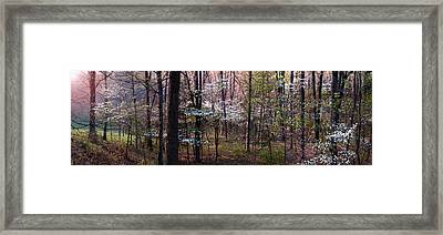 Dogwoods At Sunset Framed Print by Lloyd Grotjan