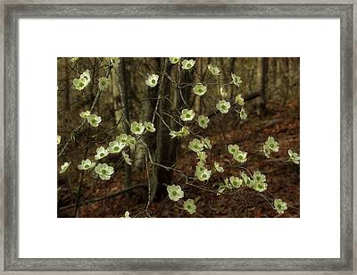 Dogwoods In The Spring Framed Print by Mike Eingle