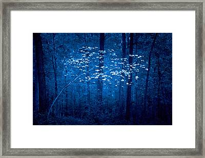 Framed Print featuring the photograph Dogwoods Of Texas by Linda Unger
