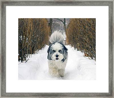 Framed Print featuring the photograph Doing The Dog Walk by Keith Armstrong