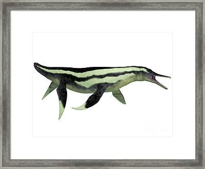 Dolichorhynchops Plesiosaur On White Framed Print by Corey Ford