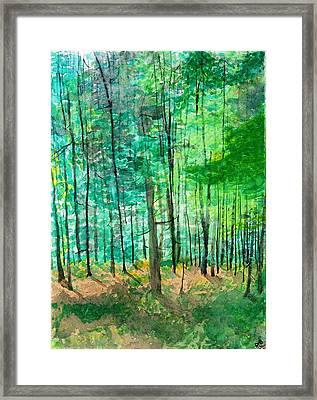 Dolly Sods Trees Framed Print by David Bartsch