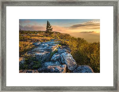 Monongahela National Forset Dolly Sods Wilderness Framed Print