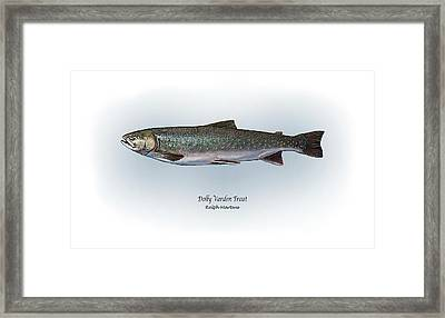 Dolly Varden Trout Framed Print by Ralph Martens