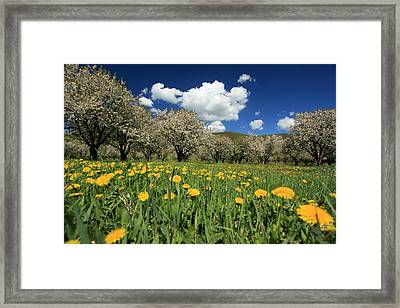 Dolne Vestenice Framed Print by Renata Vogl
