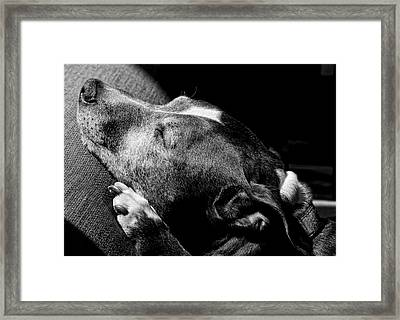 Dolores Sunbathing Framed Print