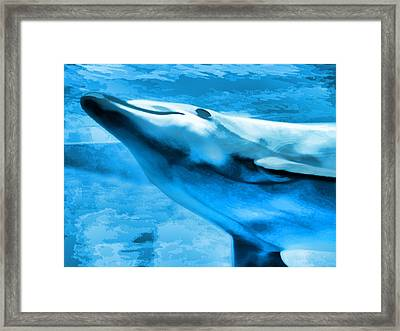 Dolphin Blue Framed Print by Wendy J St Christopher