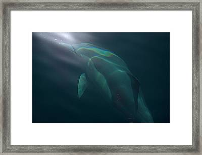 Dolphin Dreaming Framed Print by Odille Esmonde-Morgan