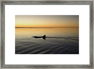 Dolphin Framed Print by Gary Wright