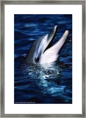 Dolphin In Eilat Framed Print