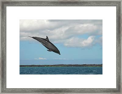 Dolphin Jump Framed Print