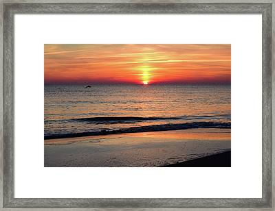 Dolphin Jumping In The Sunrise Framed Print