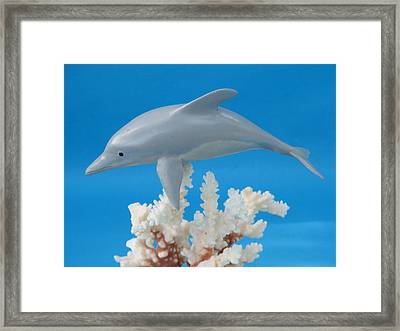 Dolphin On Coral Framed Print by Jack Murphy