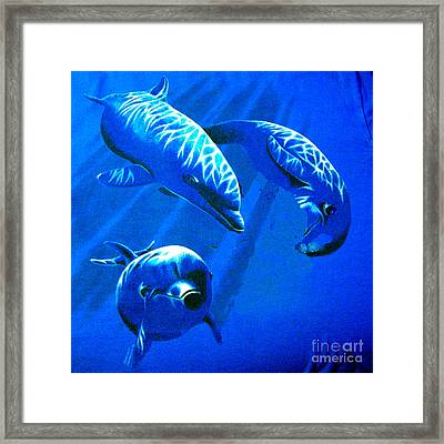Dolphin Playing  Framed Print