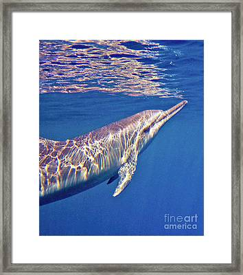 Dolphin Reflections Framed Print