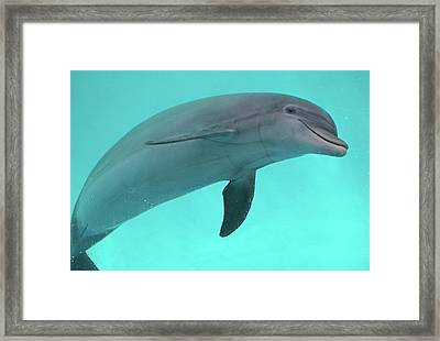 Dolphin Framed Print by Sandy Keeton