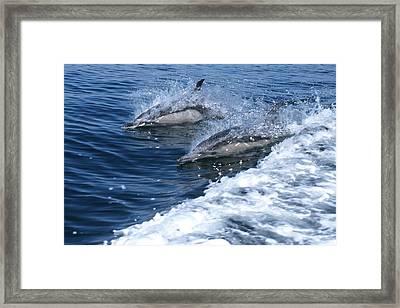 Dolphin Surfing Fantasy Framed Print