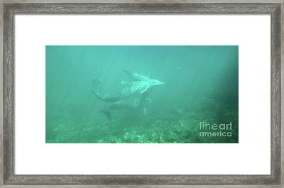 Framed Print featuring the photograph Dolphin Swim by Francesca Mackenney