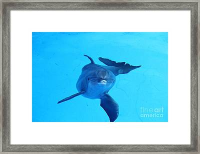 Dolphin Underwater Framed Print by Theresa Willingham