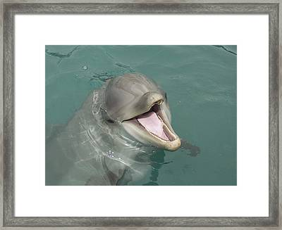 Framed Print featuring the painting Dolphin by Sean M