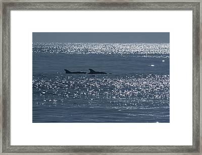 Dolphins And Reflections Framed Print