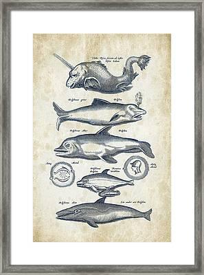 Dolphins Historiae Naturalis 08 - 1657 - 42 Framed Print