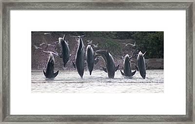 Dolphins Jump Framed Print