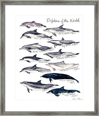 Dolphins Of The World Illustrated Chart Nautical Marine Biology Ocean Life Framed Print by Laura Row