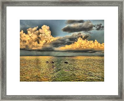Dolphins Play At Sanibel Island Framed Print by Jeff Breiman