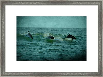Dolphins Framed Print by Sandy Keeton