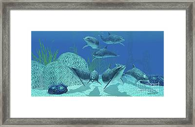 Dolphins Underwater Framed Print by Corey Ford